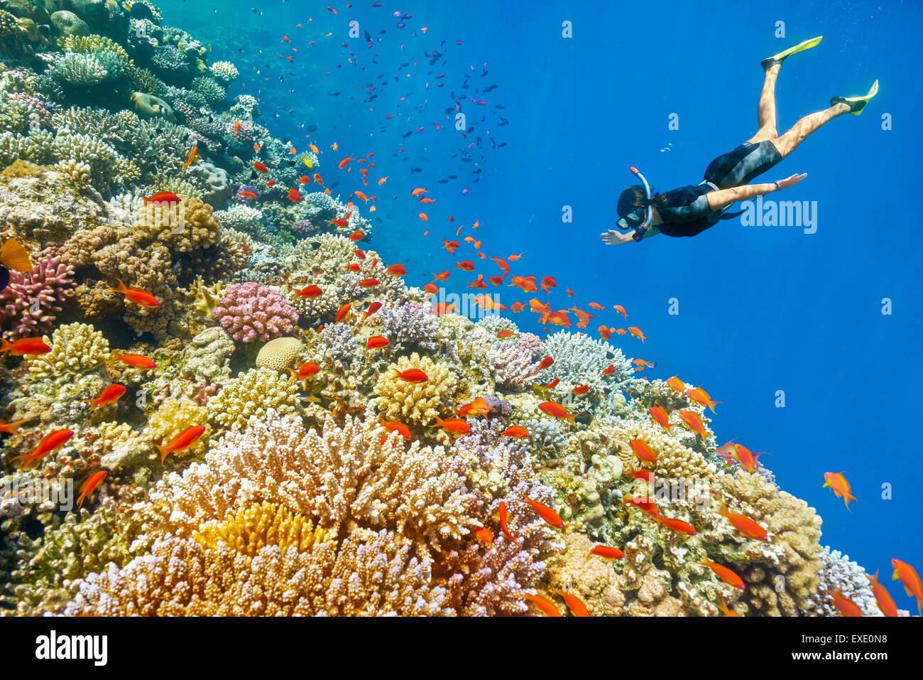 Mar Rosso, Egitto - donna snorkeling subacquea, Coral reef, buco blu vicino a Dahab Immagini Stock