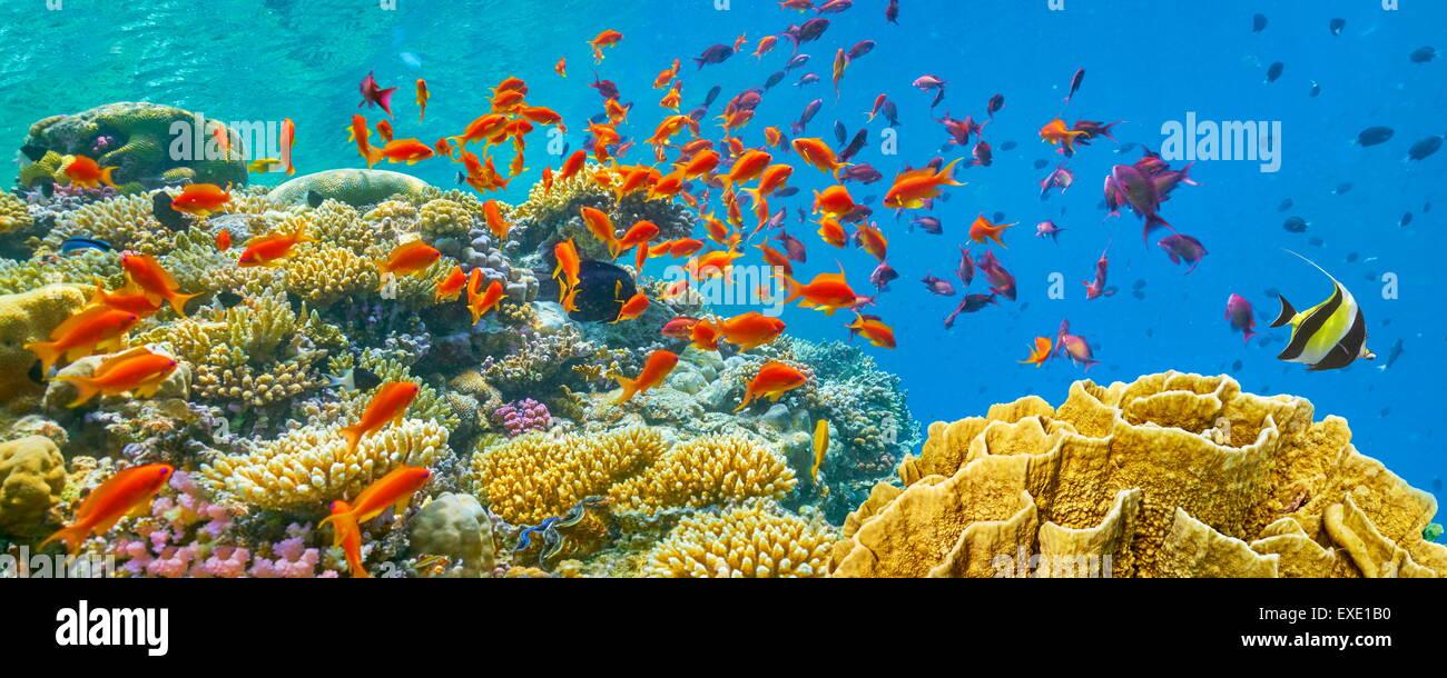 Mar Rosso, Egitto - vista subacquea a pesci e barriera corallina Immagini Stock