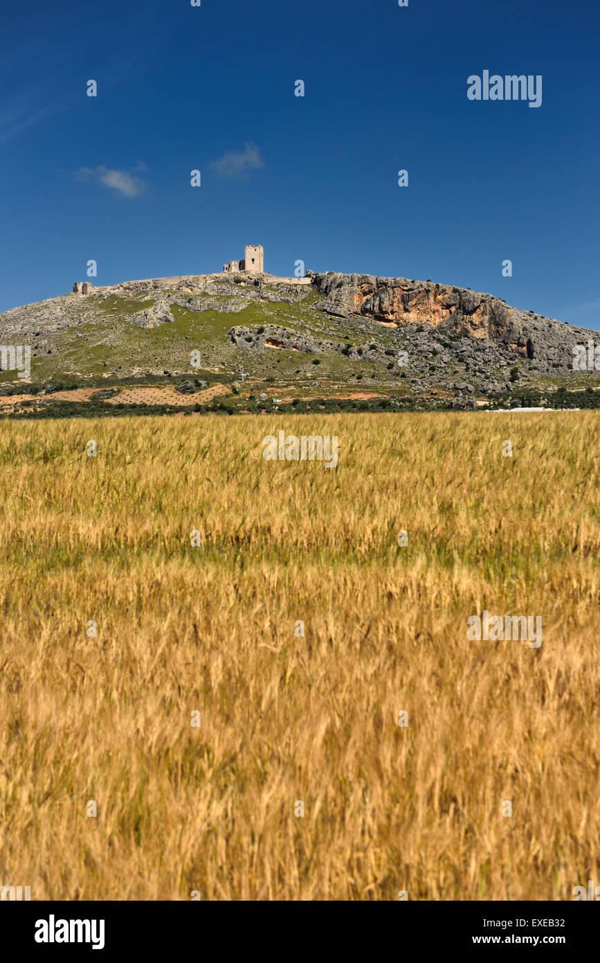 Rovine del Castello di Estrella a Teba Malaga Spagna con campo di grano Immagini Stock