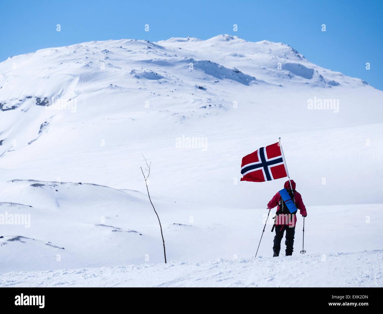 Giornata nazionale il 17 maggio, i Norvegesi a piedi su sci , portando bandiere norvegesi, a piedi da Finse, la Immagini Stock