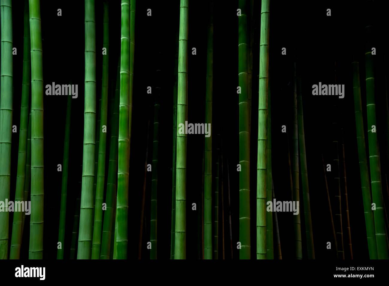 Gli alberi di bambù di notte, Tokyo, Giappone Immagini Stock