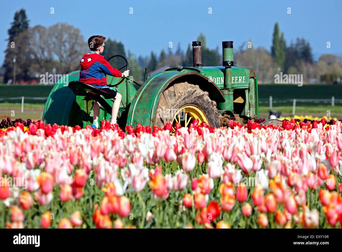 Colorato campo di tulipani e ragazzo seduto sul trattore, Tulip Fest, scarpe di legno Tulip Farm, Woodburn, vicino Immagini Stock