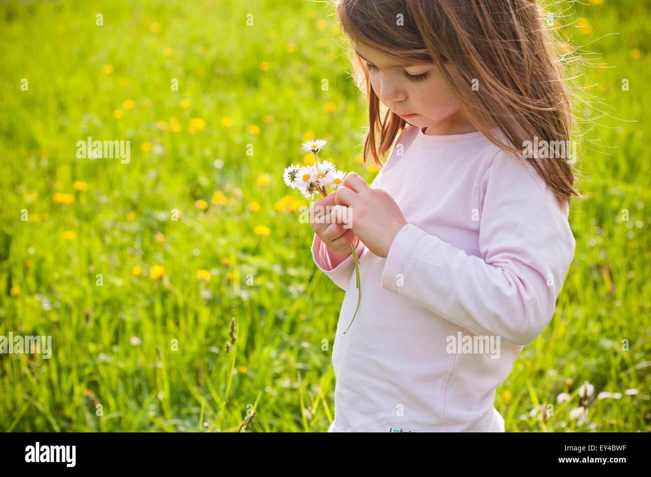 Ragazza giovane nel campo guardando margherite nelle sue mani Immagini Stock
