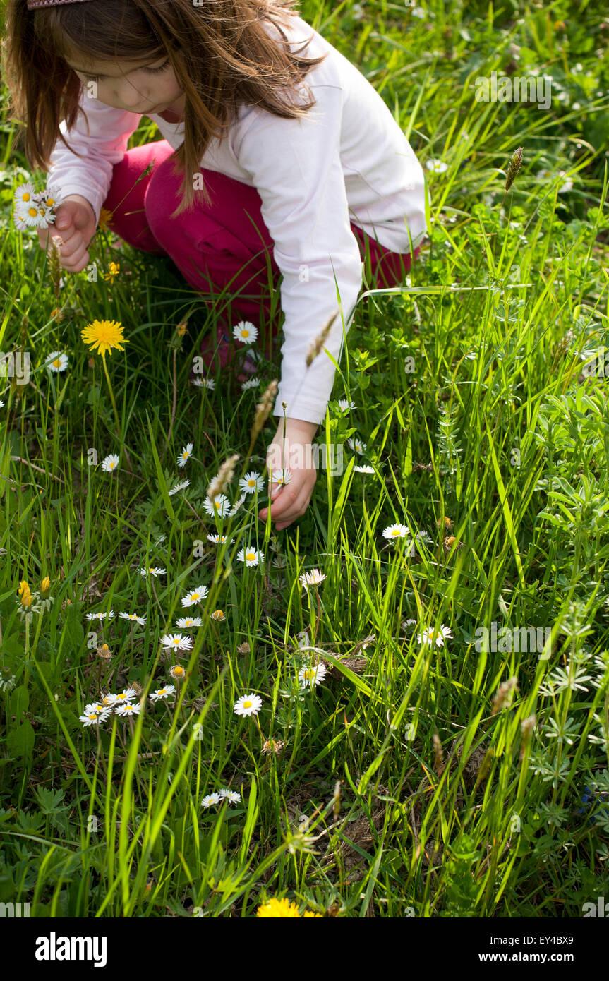 Ragazza giovane Picking margherite nel campo Immagini Stock