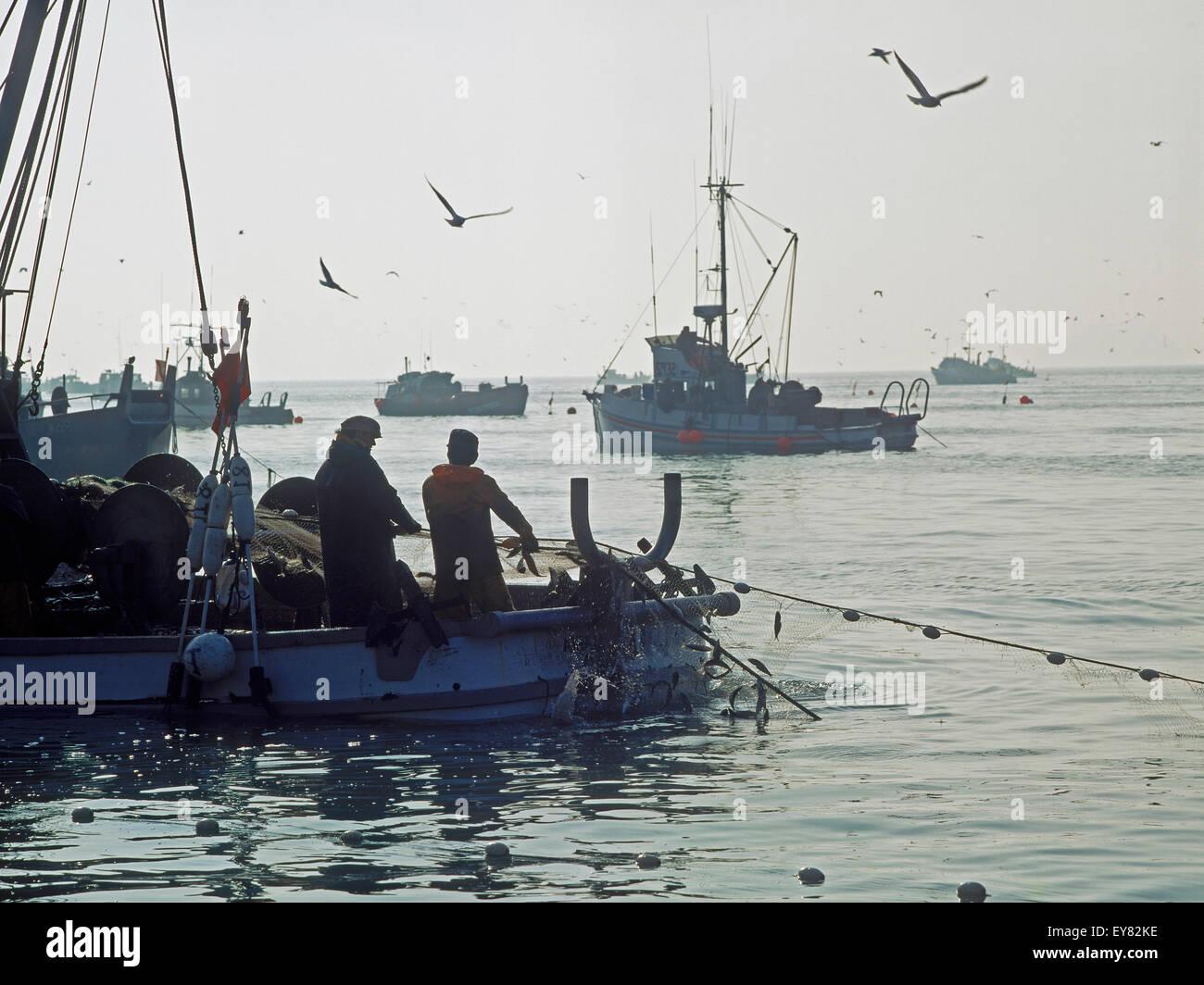 I pescatori reti di carico pieno di aringa off Sausalito, California Immagini Stock