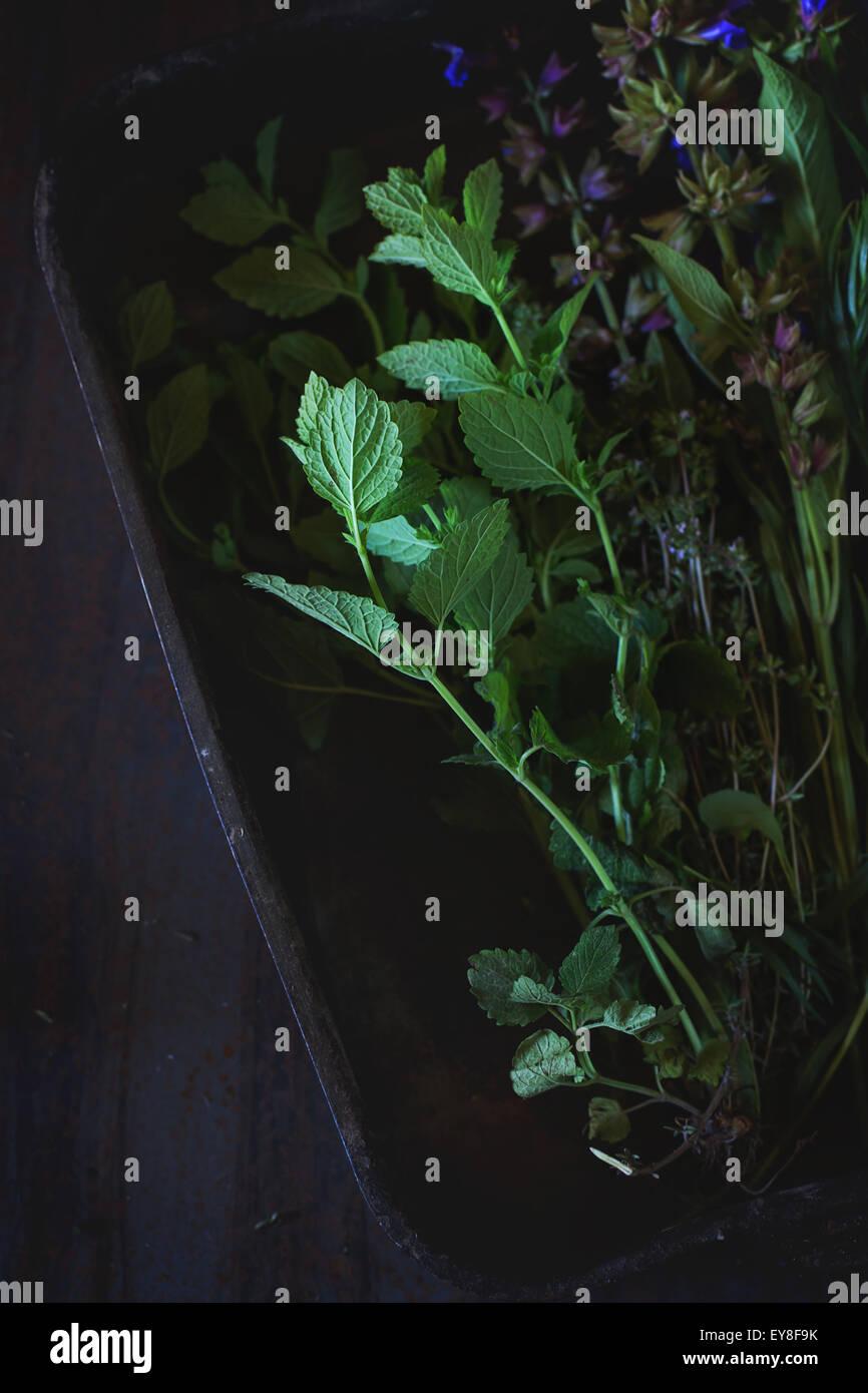 Assortimento di erbe fresche Immagini Stock