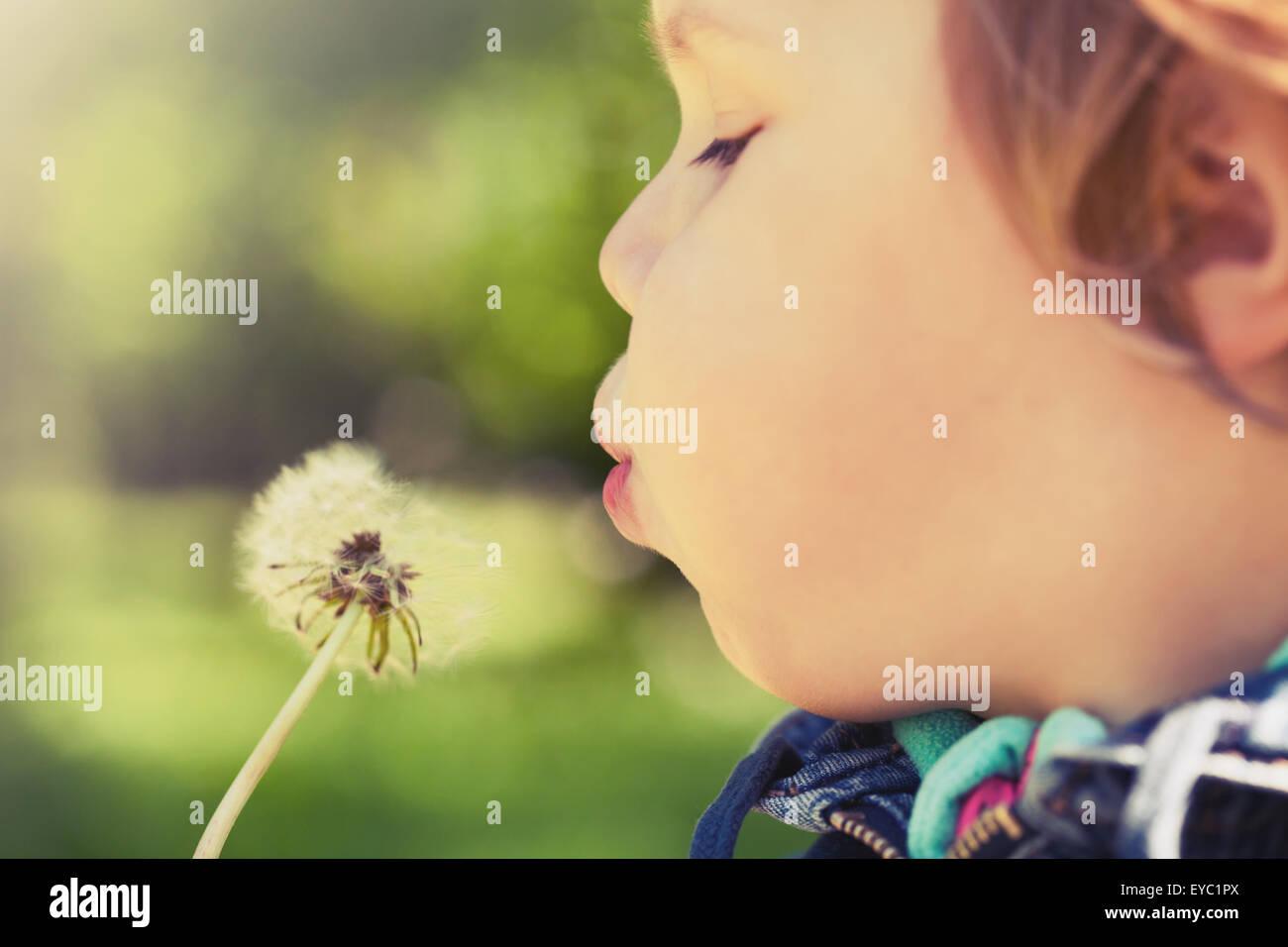 Bionda caucasica Baby girl soffia su un fiore di tarassaco in un parco, vintage tonica foto con messa a fuoco selettiva Immagini Stock