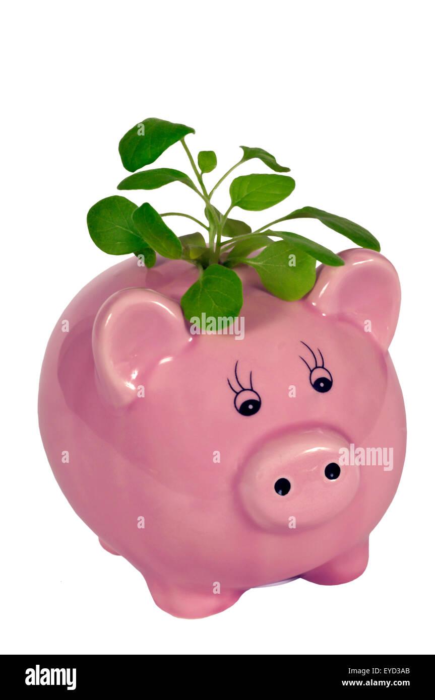 Guarda i tuoi risparmi crescono concetto con rosa salvadanaio e piccola pianta su sfondo bianco Immagini Stock