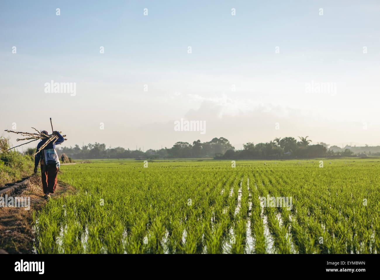 Imprenditore nel campo di riso Foto Stock