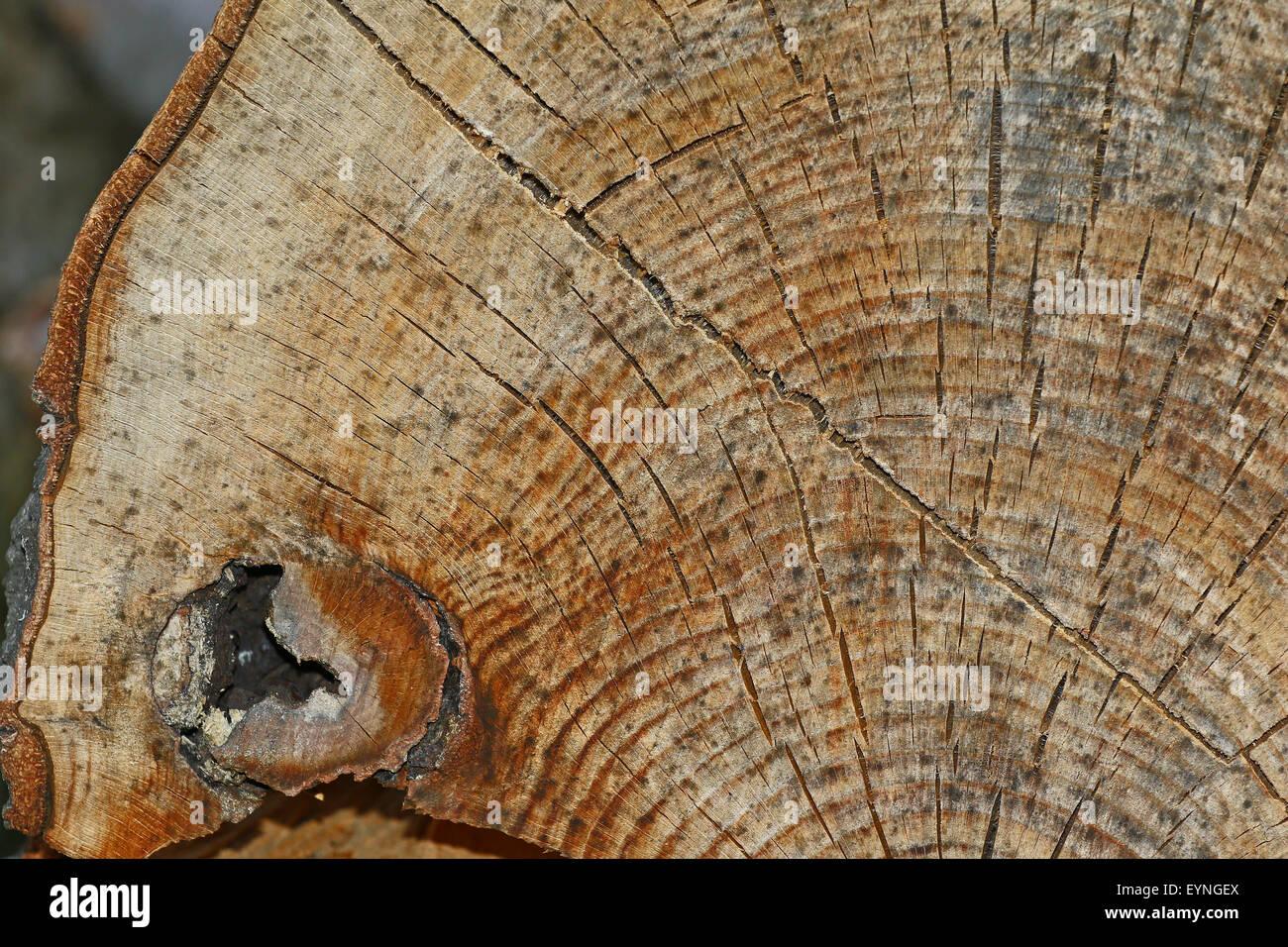 Un unico vecchio, weathered sezione di legno con anelli incrinato e sorprendente texture dettagliate per gli sfondi. Immagini Stock