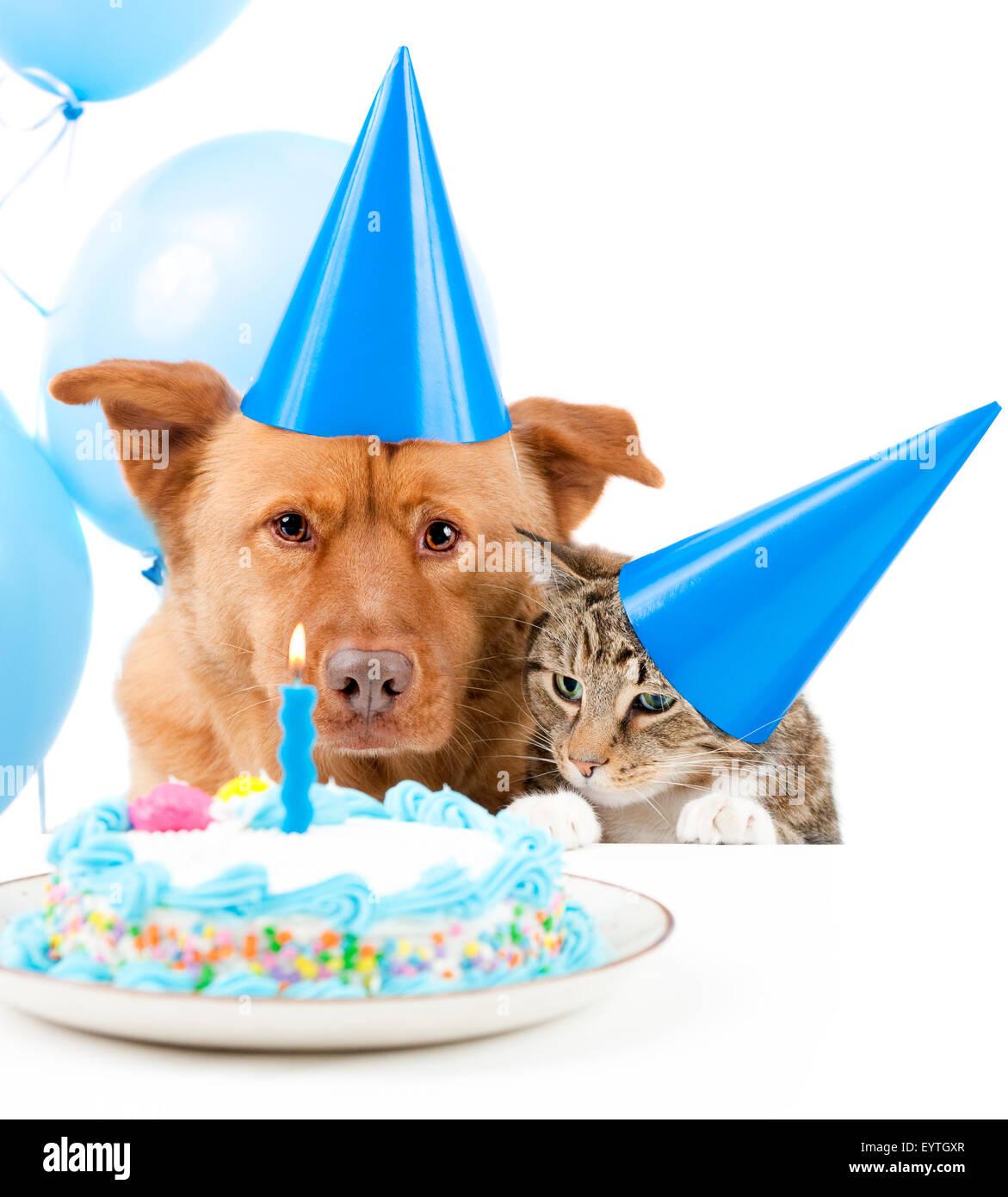 Cane E Gatto Festa Di Compleanno Con Torta Foto Immagine Stock