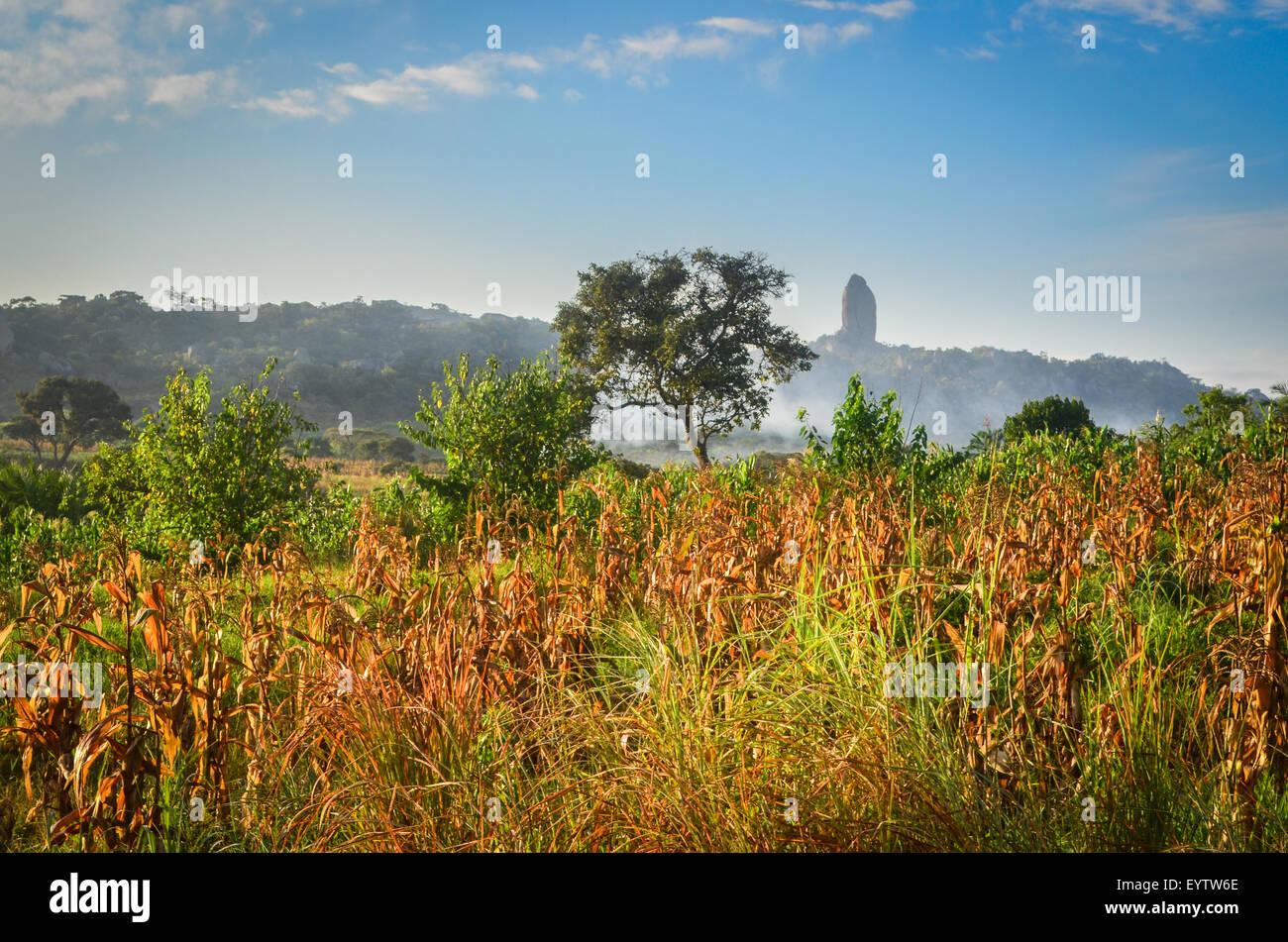 Il mais (mais) campi del Cuanza Sul provincia di Angola presso sunrise Immagini Stock