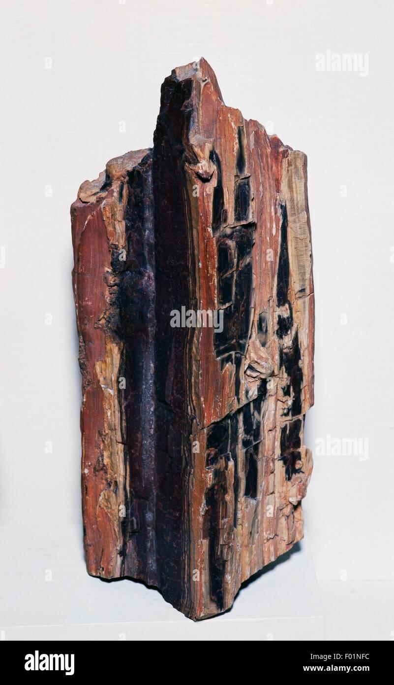 Frammento di fossilizzato log dal Cretaceo. Immagini Stock