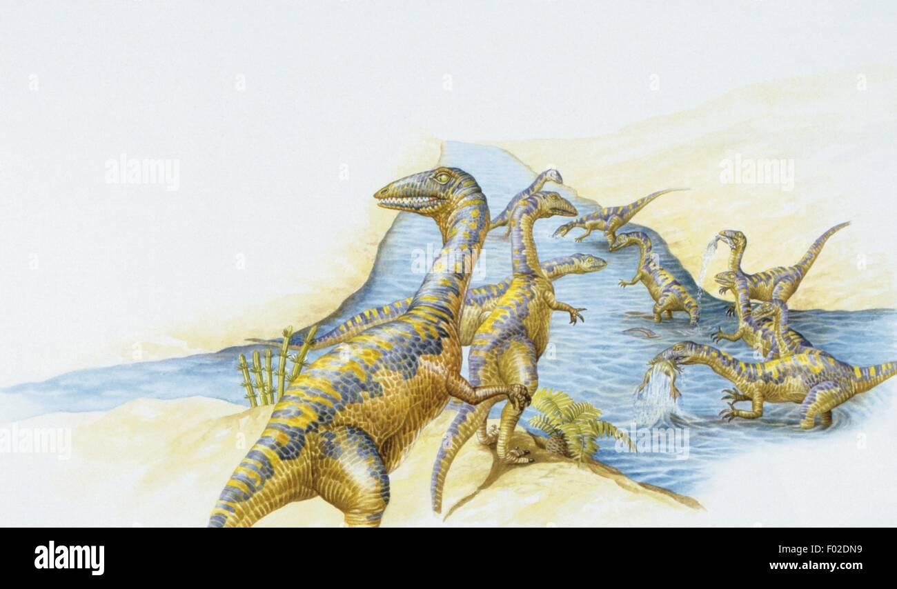 Zoopaleontologia - periodo triassico - i dinosauri - Coelophysis Immagini Stock