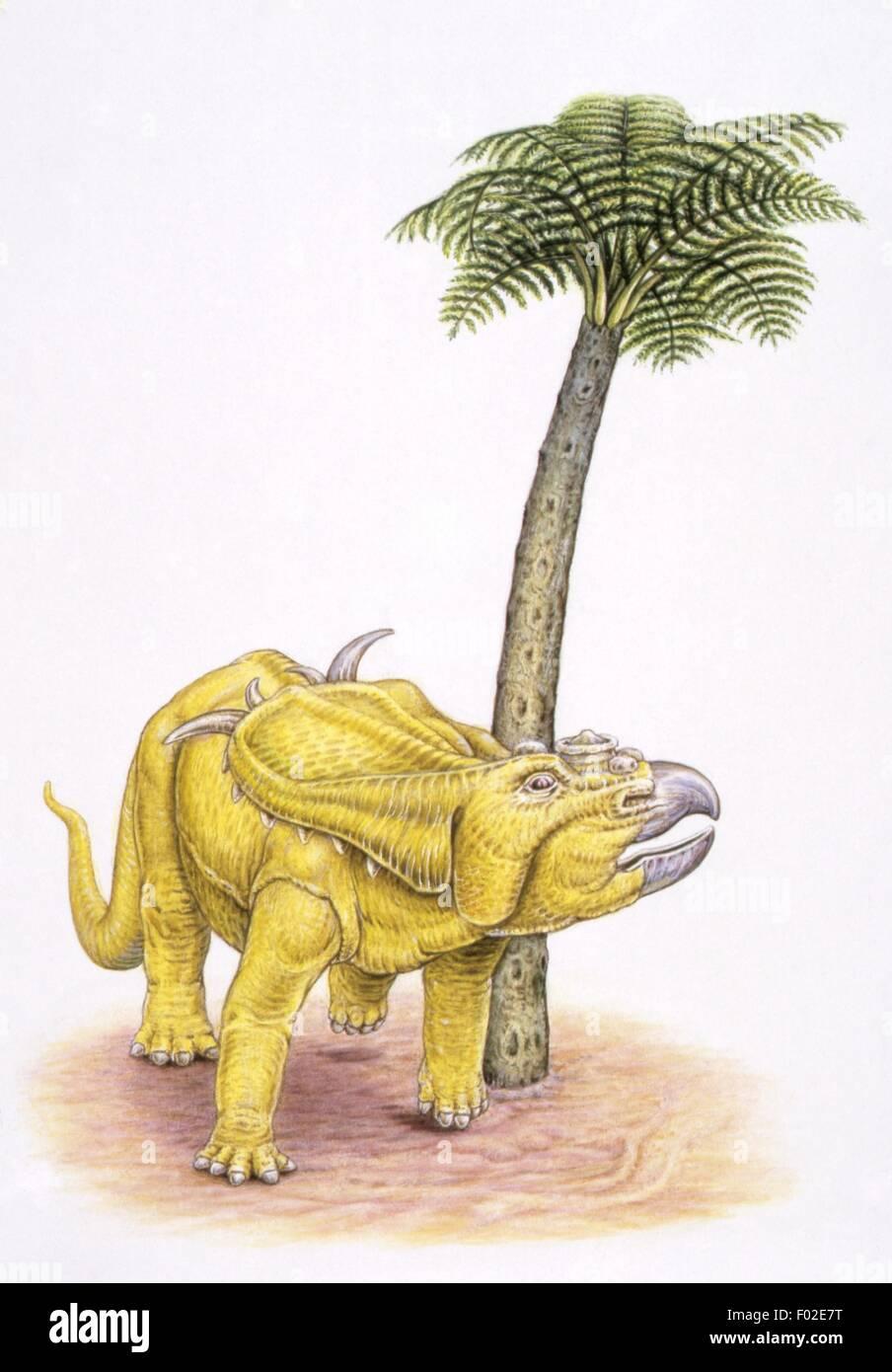 Zoopaleontologia - del periodo Cretaceo - i dinosauri - Pachyrhinosaurus - opera d'arte Foto Stock