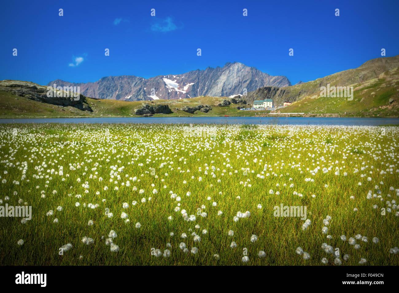 Il Parco Nazionale dello Stelvio e il Passo Gavia, Valfurva, Alpi Italia - il Lago Bianco Foto Stock