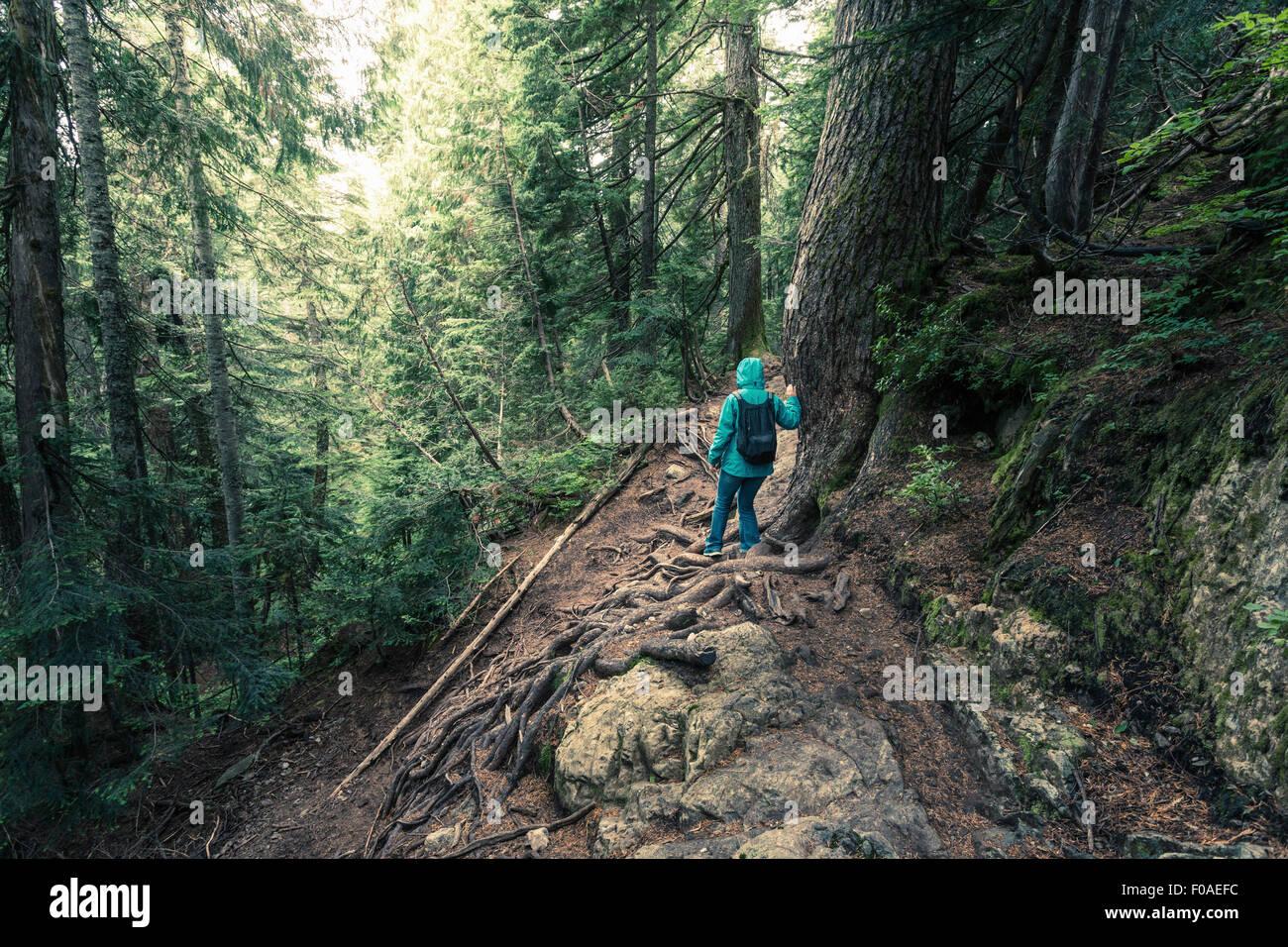 Vista posteriore di un escursionista femmina si sta spostando verso il basso ripida montagna foresta, British Columbia, Immagini Stock