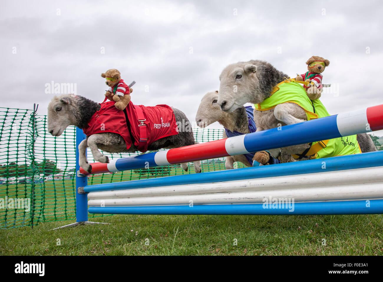 Il Castello di Rockingham, Northamptonshire, Regno Unito. Il 13 agosto 2015. Undicesimo Kennel Club Internazionale Immagini Stock