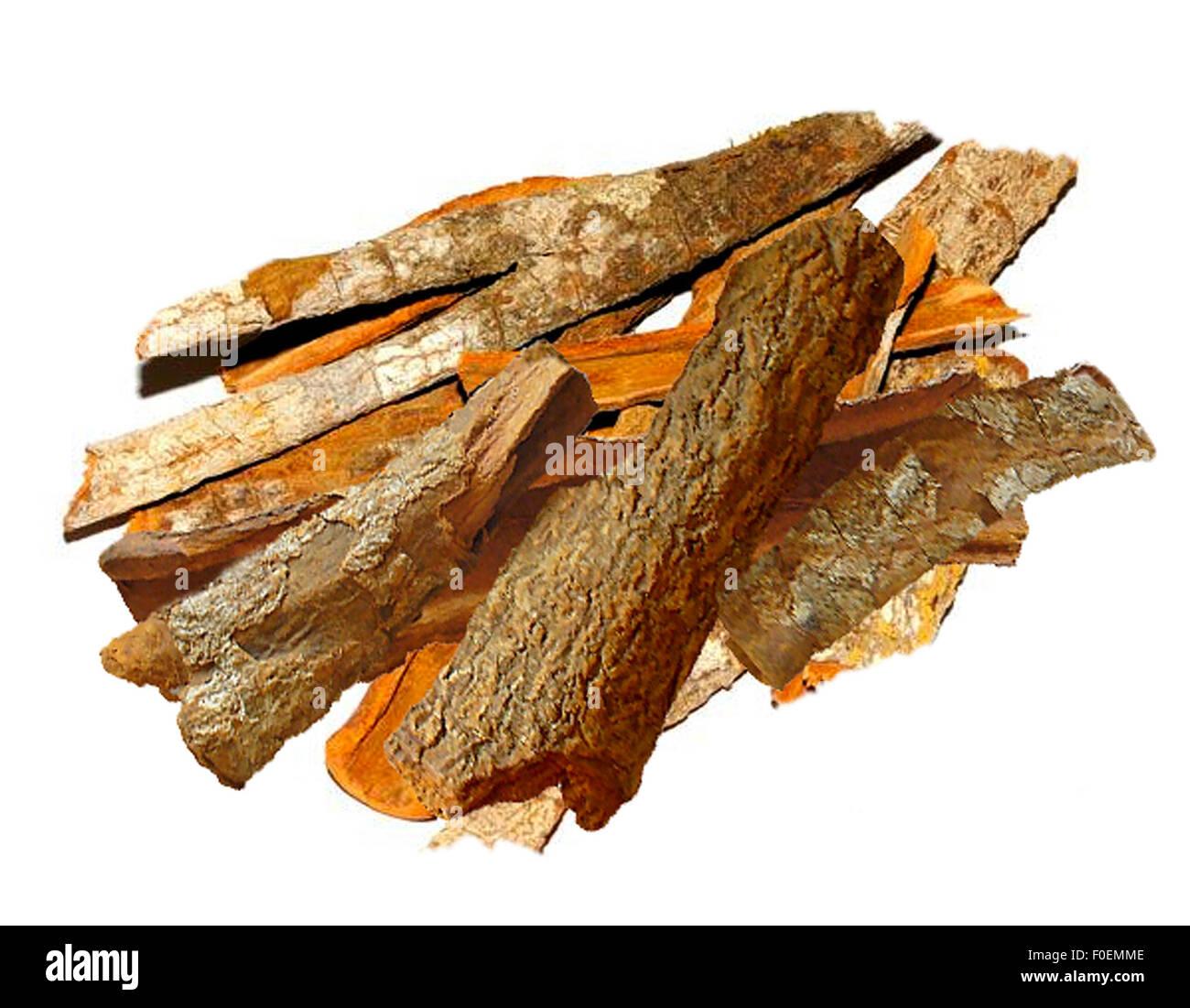 Chinin, Chinarinde, Malariamittel, Heilpflanzen, Immagini Stock