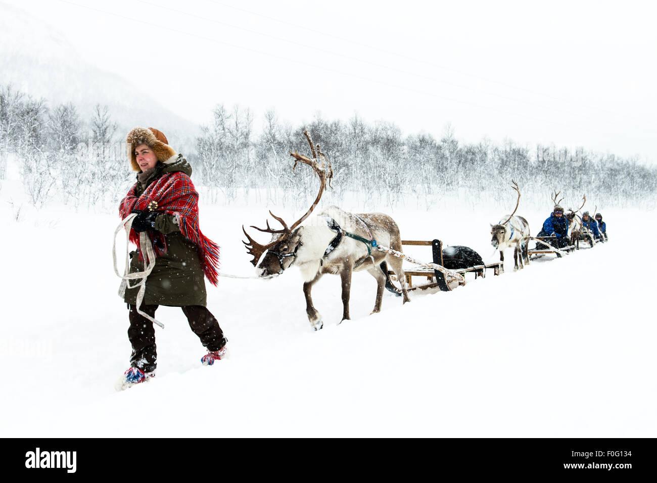 Sami renne herder principali corse su slitte trainate da renne Camp Tamok Lapponia Norvegia Scandinavia Immagini Stock