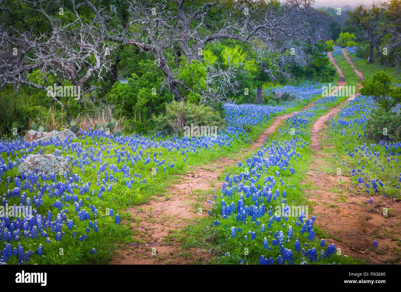 Vecchia strada e bluebonnets nel Texas Hill Country Immagini Stock