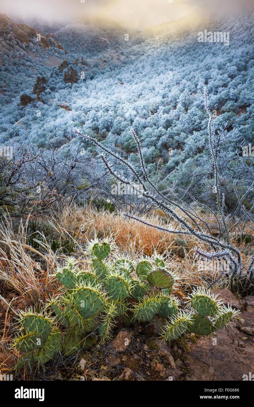 Parco nazionale di Big Bend in Texas è la più grande area protetta del deserto del Chihuahuan negli Stati Immagini Stock