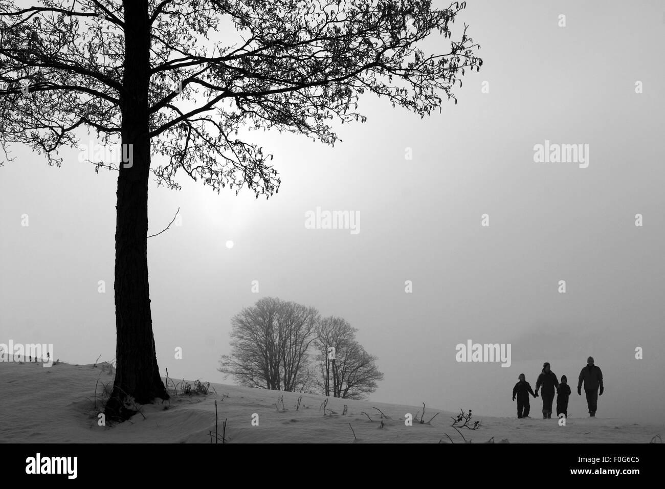 La mattina di sole in inverno in Danimarca, un campo con alberi di nebbia e neve Immagini Stock