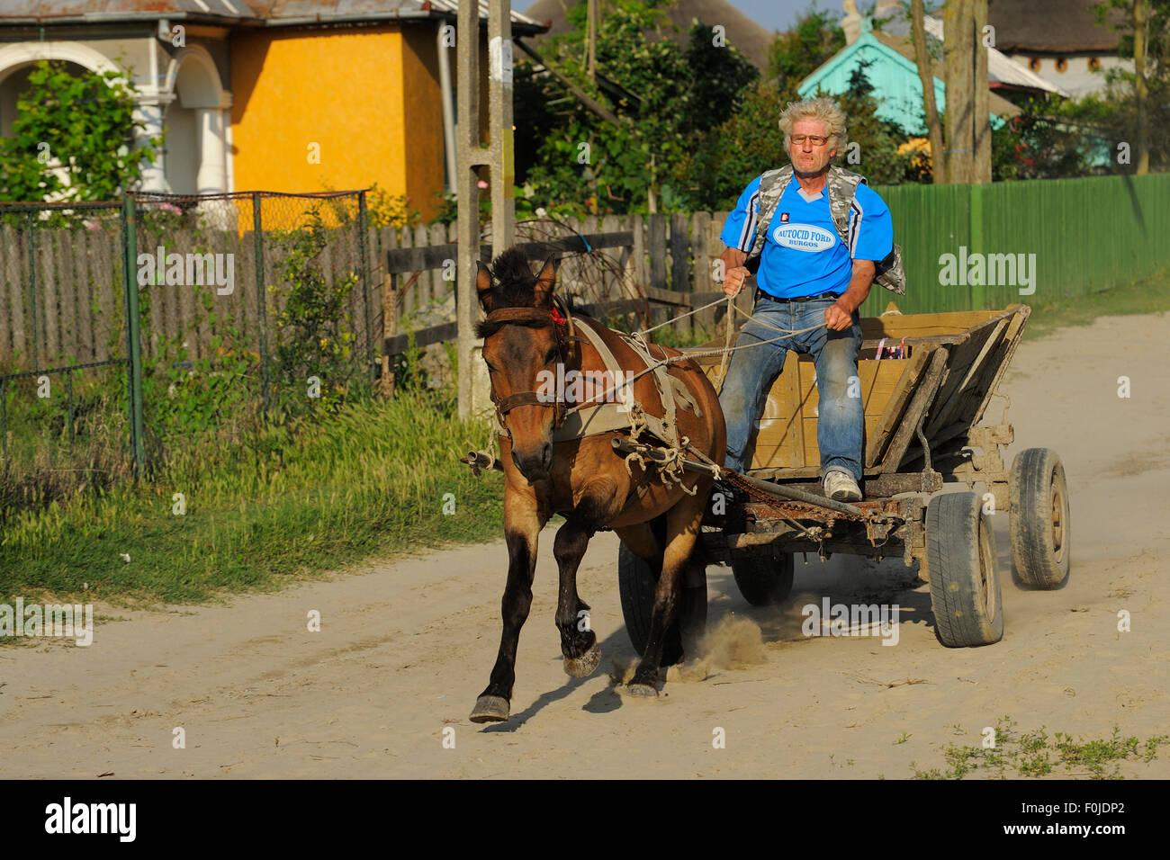 I tradizionali mezzi di trasporto, cavallo e carrello, Sfinthu Gheorghe, delta del Danubio area rewilding, Romania Immagini Stock
