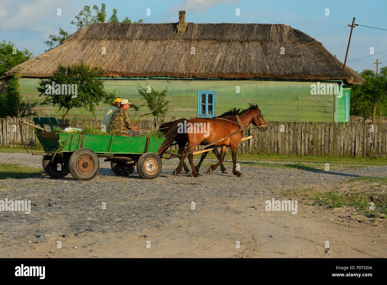 I tradizionali mezzi di trasporto, cavallo e carrello, Letea, il delta del Danubio rewilding area, la Romania può Immagini Stock