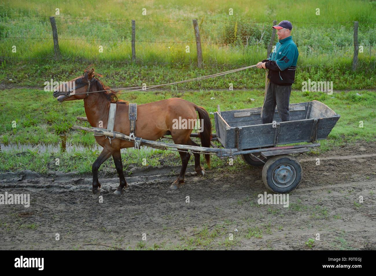 I tradizionali mezzi di trasporto, cavallo e carrello, il delta del Danubio rewilding area, la Romania può Immagini Stock