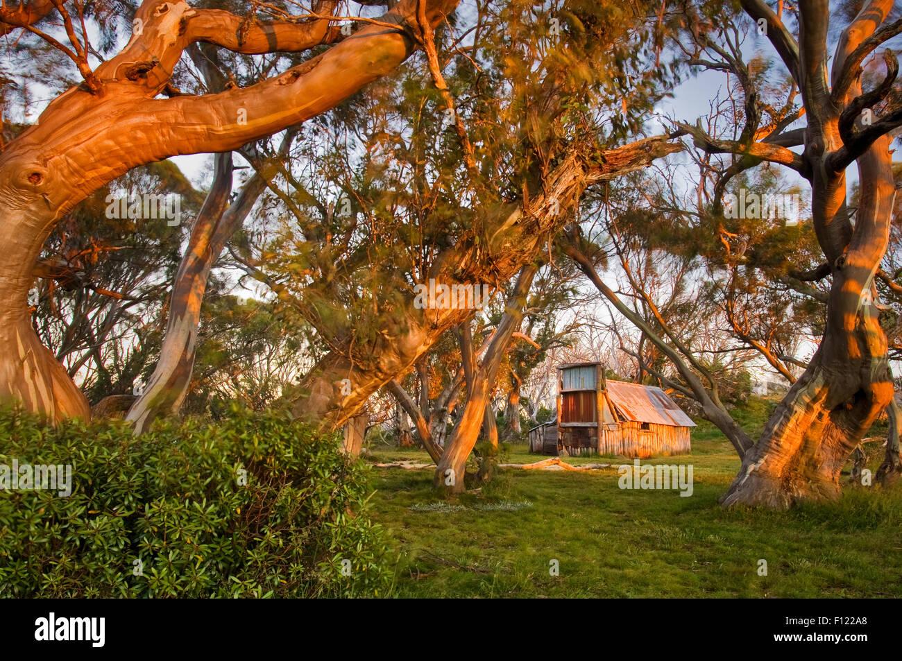 Wallaces capanna in mattina presto luce. Immagini Stock
