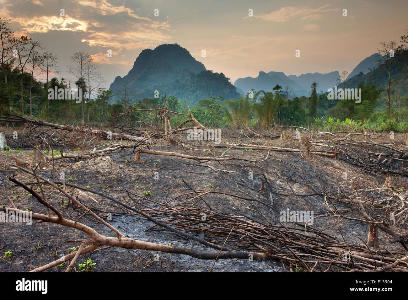 Slash e bruciare la deforestazione nei pressi di Vang Vieng, Laos, marzo 2009. Immagini Stock