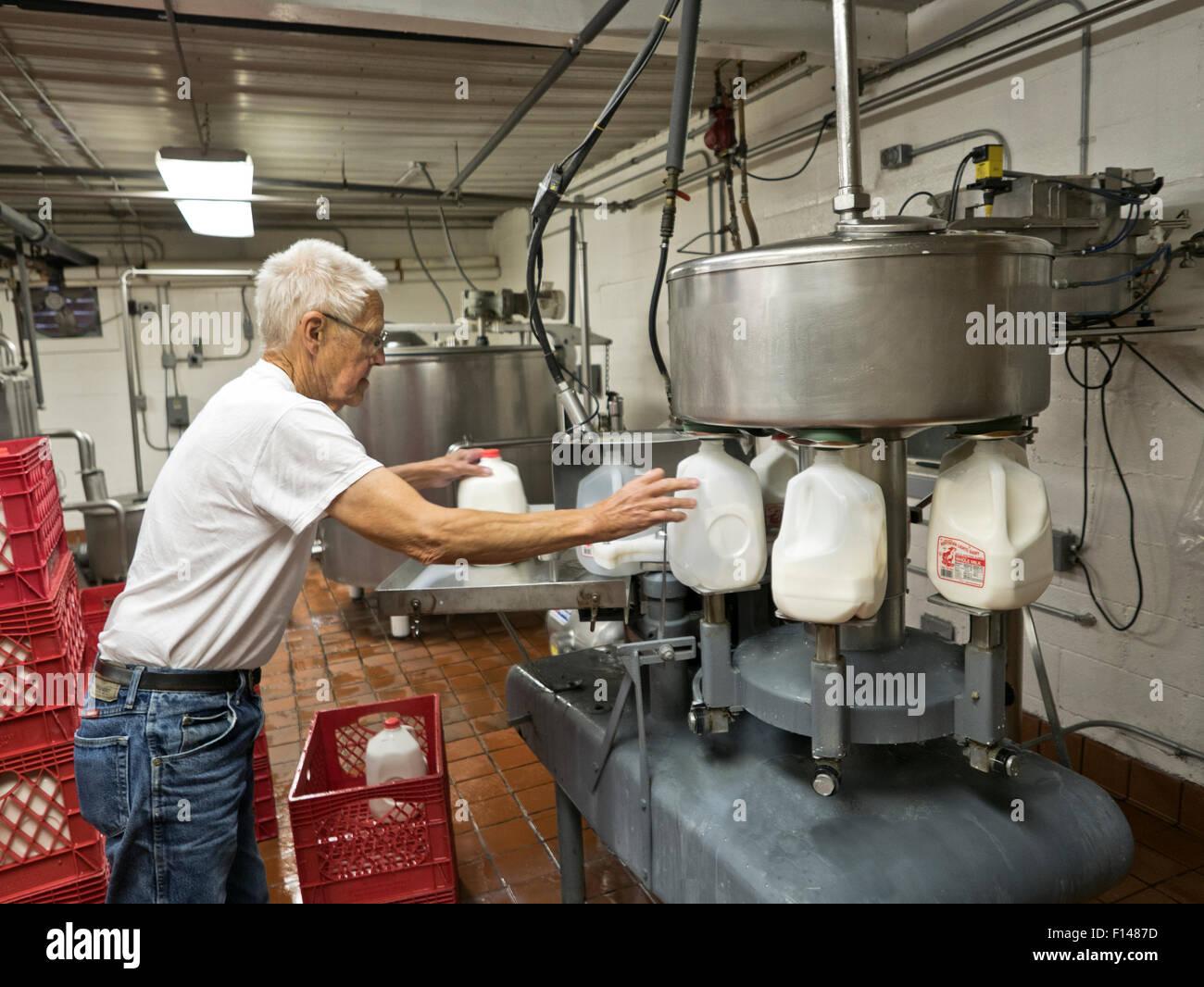 Operatore di caseificio il riempimento di un gallone di bottiglie, latte pastorizzato il latte omogeneizzato. Immagini Stock