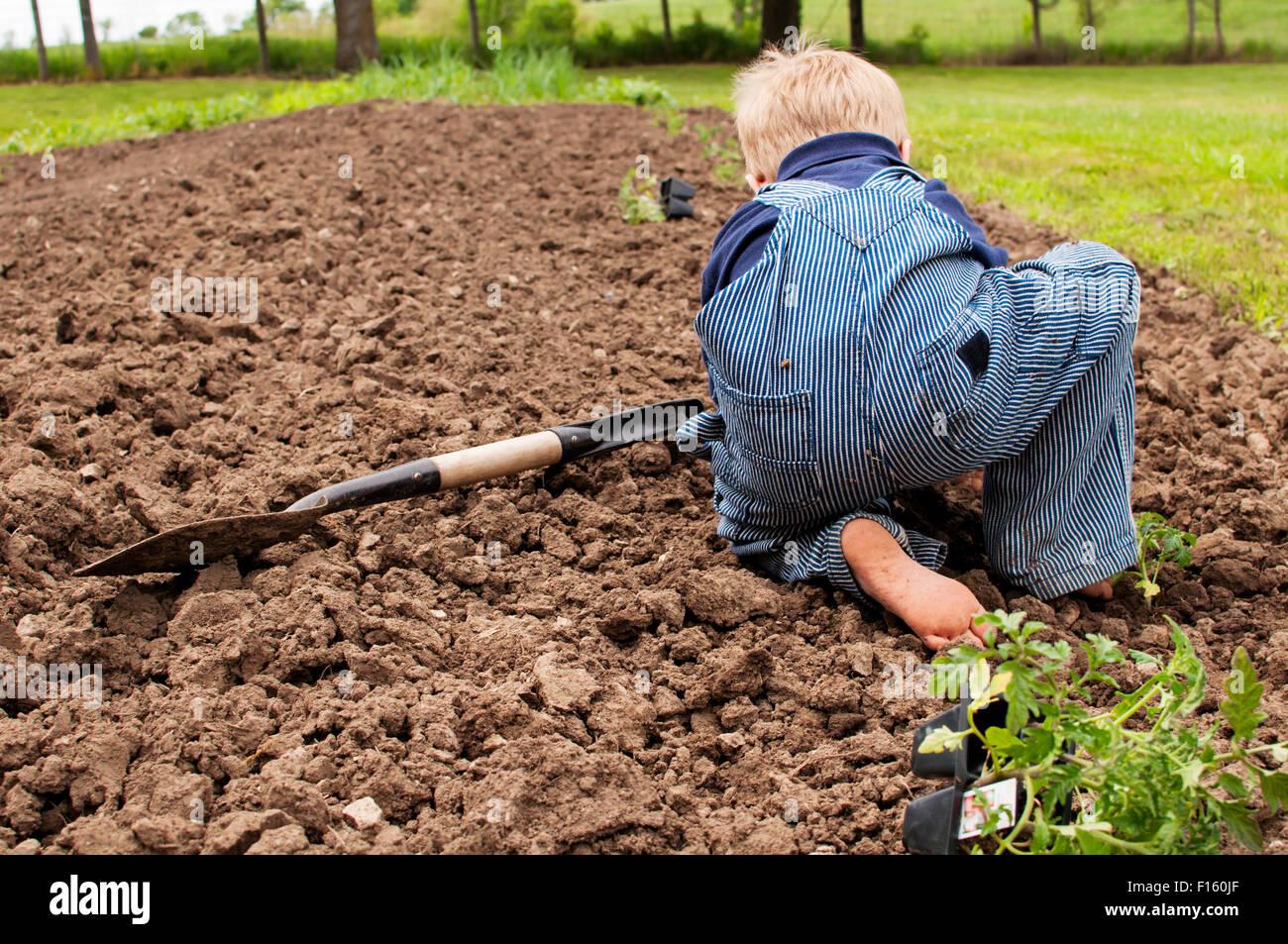 Ragazzo lavorando la semina Pomodori spring garden Immagini Stock