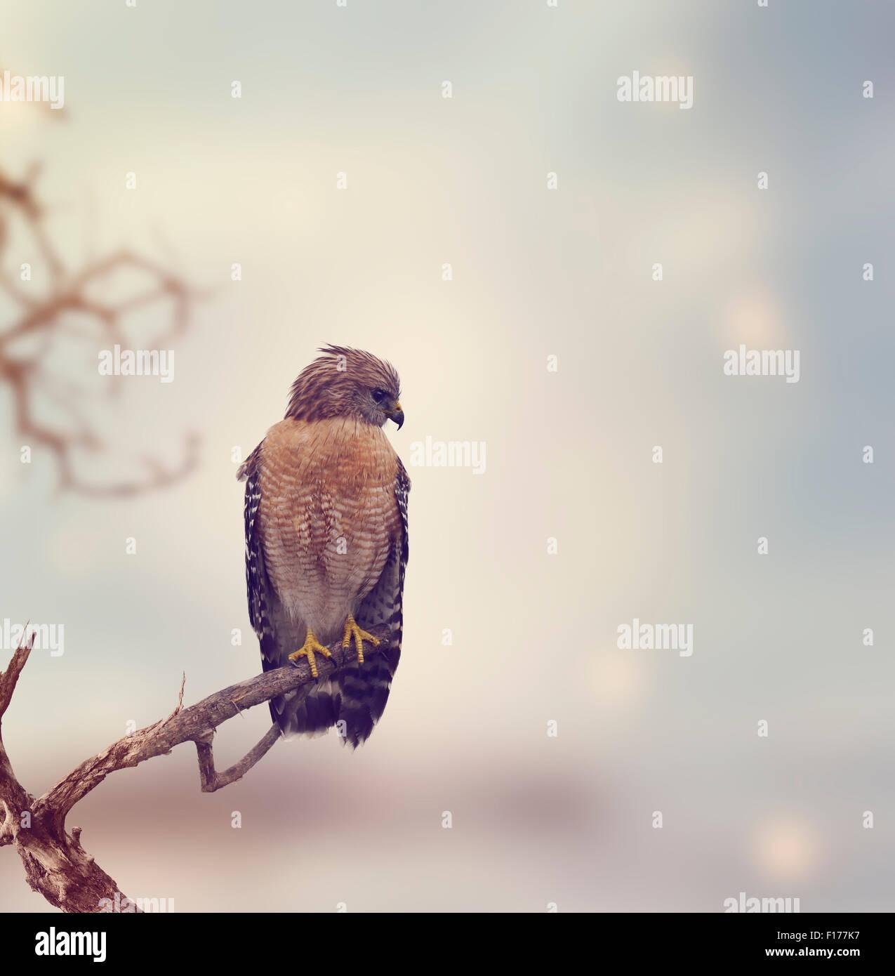 Rosso Falco con spallamento posatoi su un log Immagini Stock