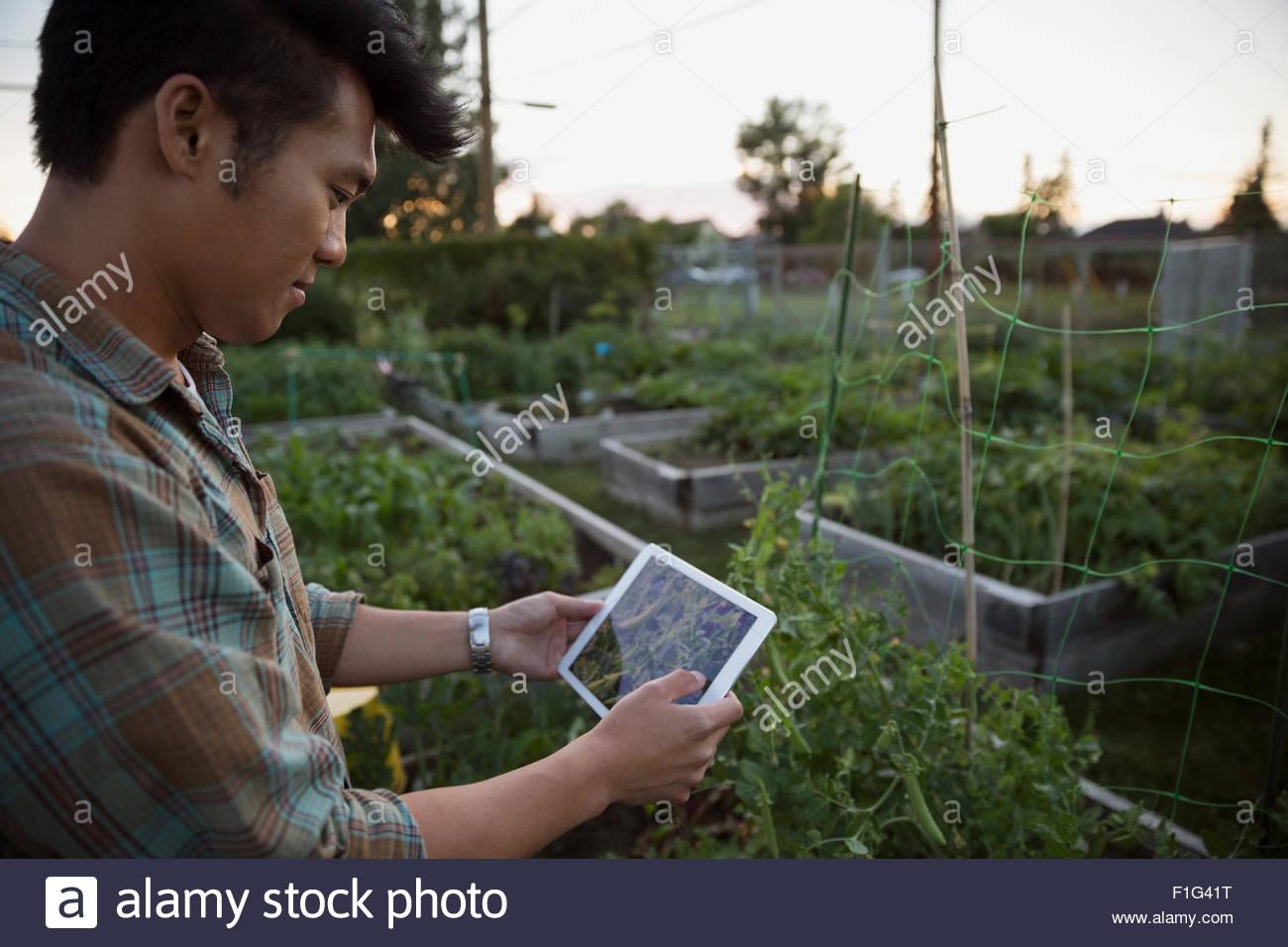 L'uomo digitale compressa confrontando il segnale di PEA a scatto il giardino di piante Immagini Stock