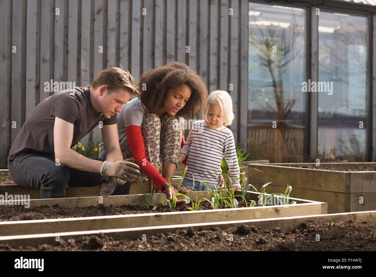 Ragazzo e genitori tendendo le piante nel letto sollevata Immagini Stock