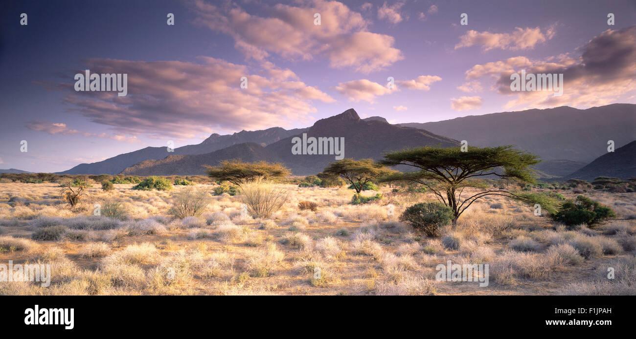 Montare Nyiru e ombrello Alberi vicino a Turkana in Kenya Immagini Stock