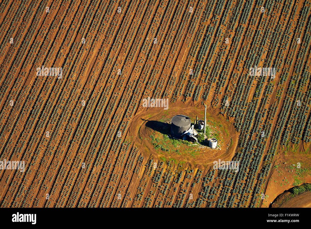 Colture vegetali, Bombay Hills, South Auckland, Isola del nord, Nuova Zelanda - aerial Immagini Stock