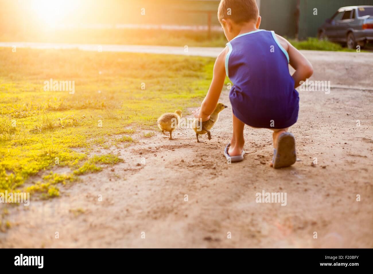 Giovane ragazzo, accarezzare anatroccoli, vista posteriore Immagini Stock