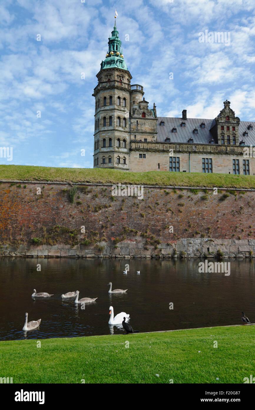 Cigni, cigneti e un cormorano nel fossato e Castello di Kronborg a Helsingør / Elsinore, Royal North Sealand, Danimarca. Foto Stock