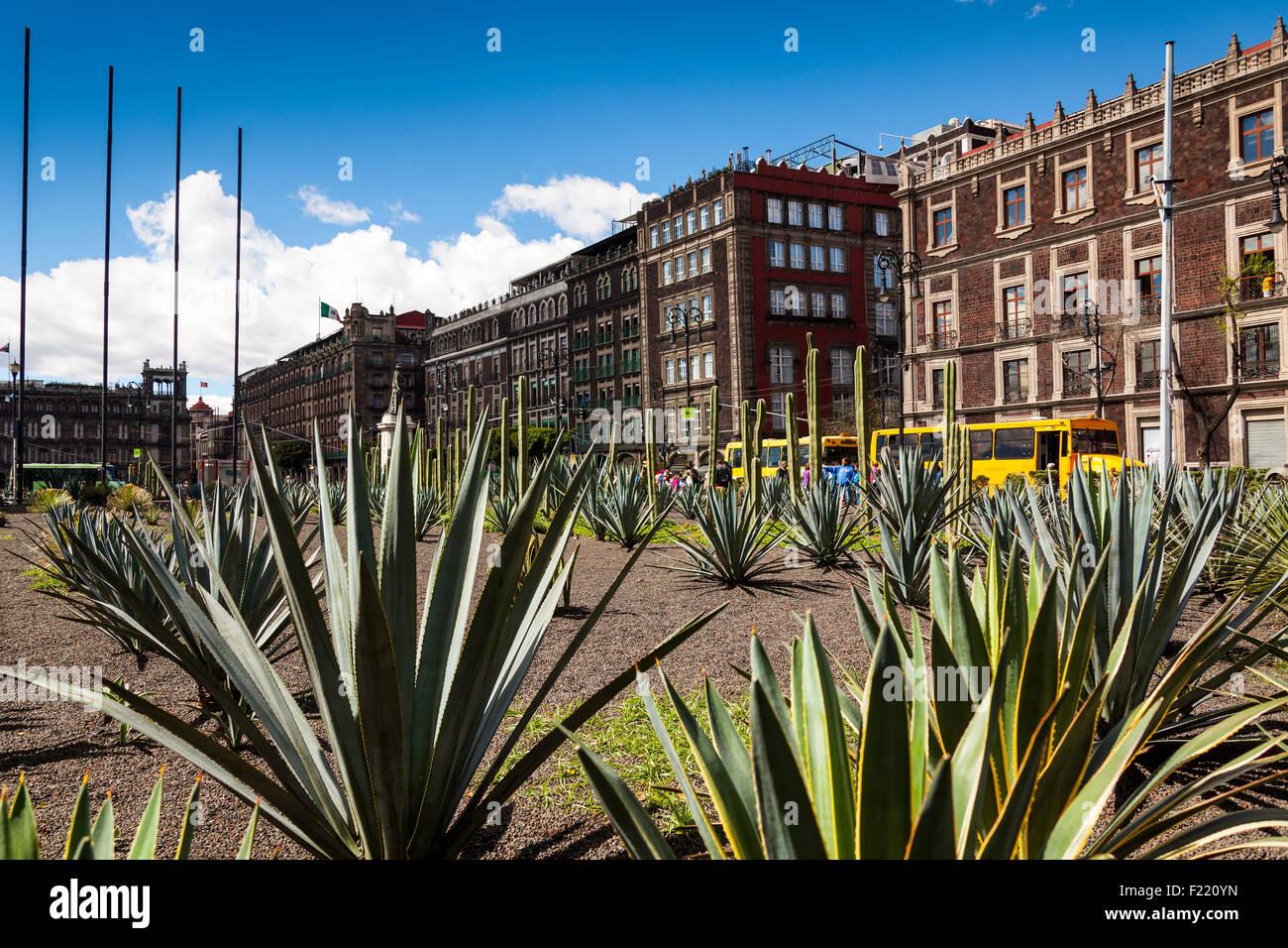 Agave giardino piazza Zocalo di Città del Messico Distretto Federale DF America del Nord Immagini Stock