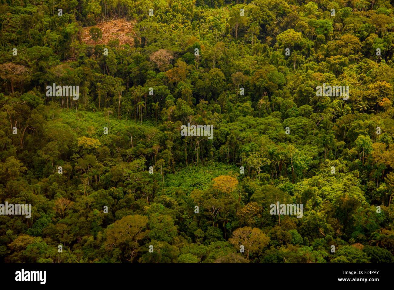 Antenna della foresta pluviale, foresta secondaria e terra di sdoganamento per l'agricoltura su piccola scala Immagini Stock
