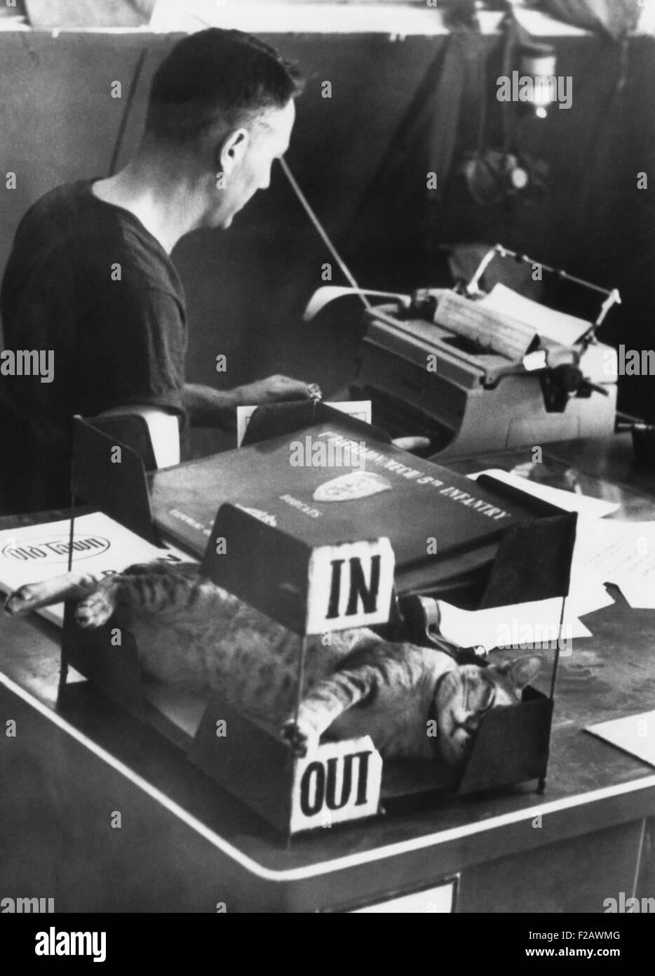 SAM, mascotte di U.S. Vestito dell'esercito a Cu Chi, Sud Vietnam, dorme nella Out-Box. 14 febbraio, 1968. Egli Immagini Stock