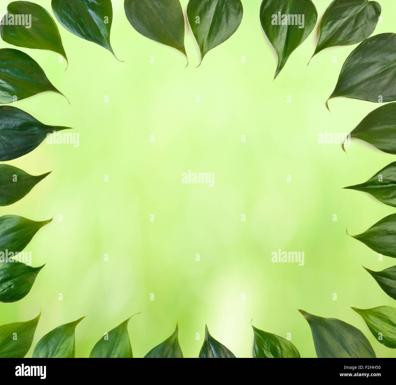 Foglie verde foglia sfondo di confine Immagini Stock