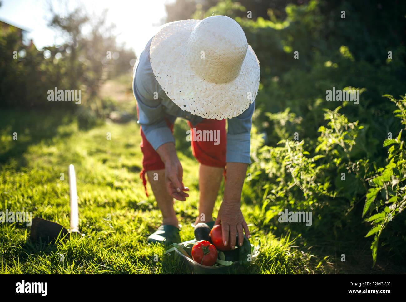Senior donna con cappello di paglia lavorando nel suo giardino Immagini Stock