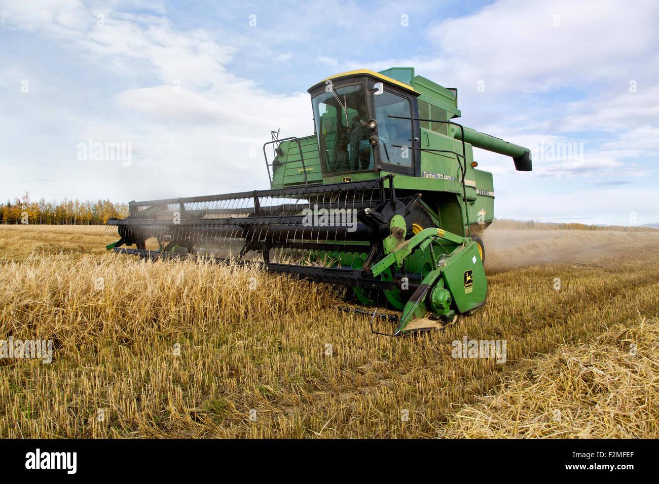 """Raccolto di orzo """"Arra"""" varietà, agricoltore operante John Deere mietitrebbia 7720. Immagini Stock"""