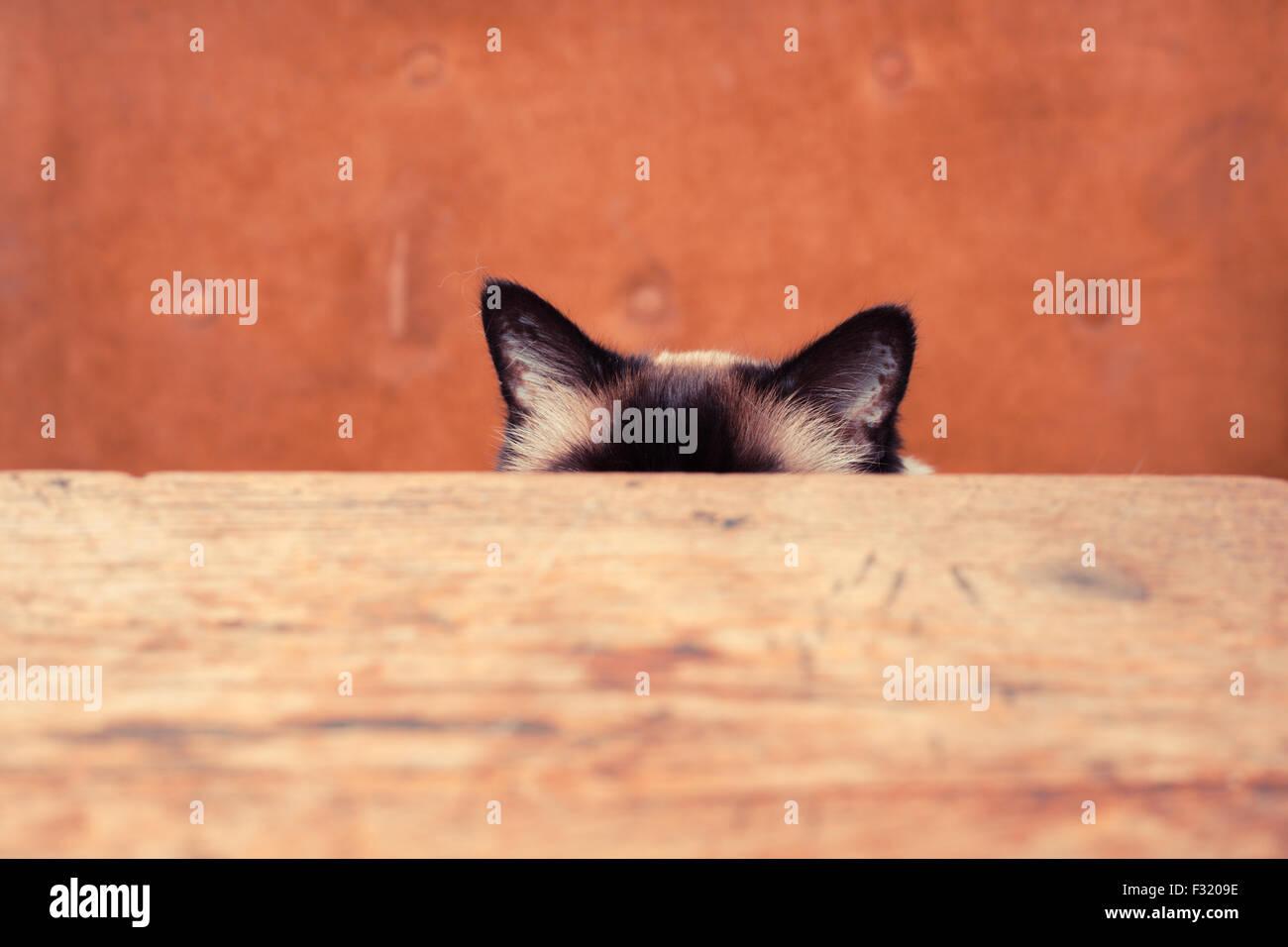 Piuttosto il gatto è nascosto dietro un tavolo, solo le sue orecchie sono visibili Immagini Stock