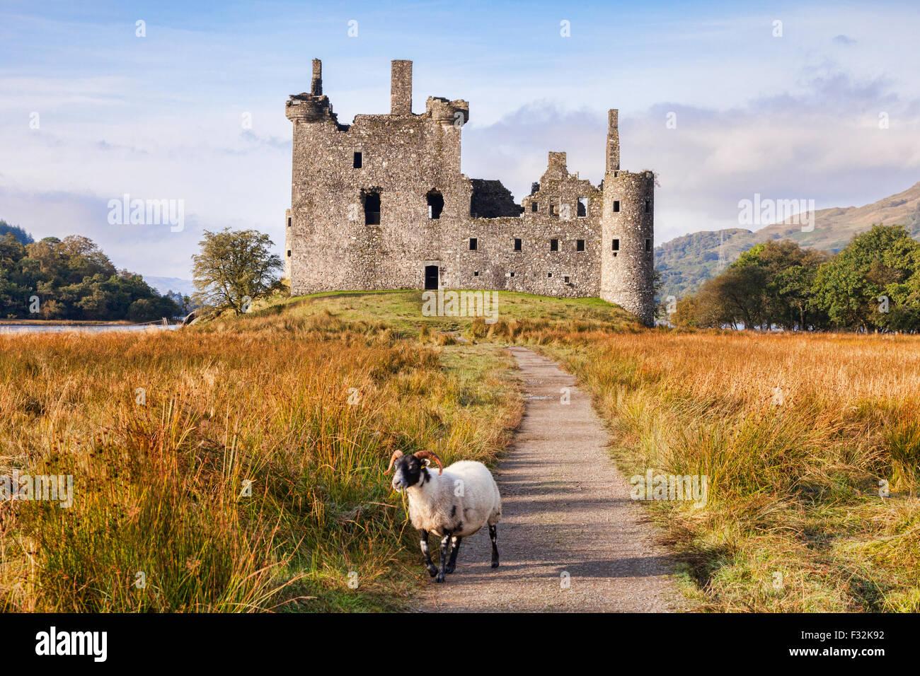 Kilchurn Castle, il percorso che conduce ad esso e un Scottish Blackface ram, Loch Awe, Argyll and Bute, Scotland, Immagini Stock