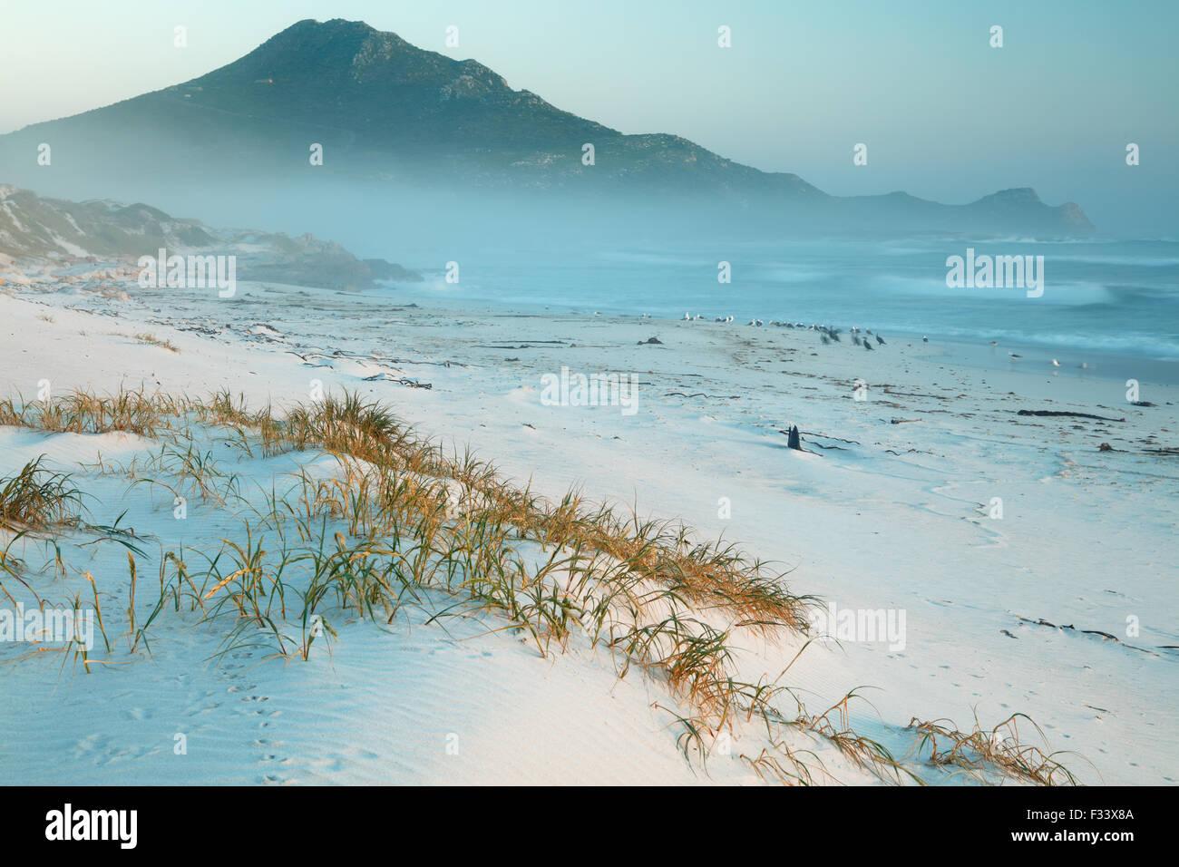 Cormorani e gabbiani sulla spiaggia Platboom e il Capo di Buona Speranza a Cape Point, Sud Africa Immagini Stock
